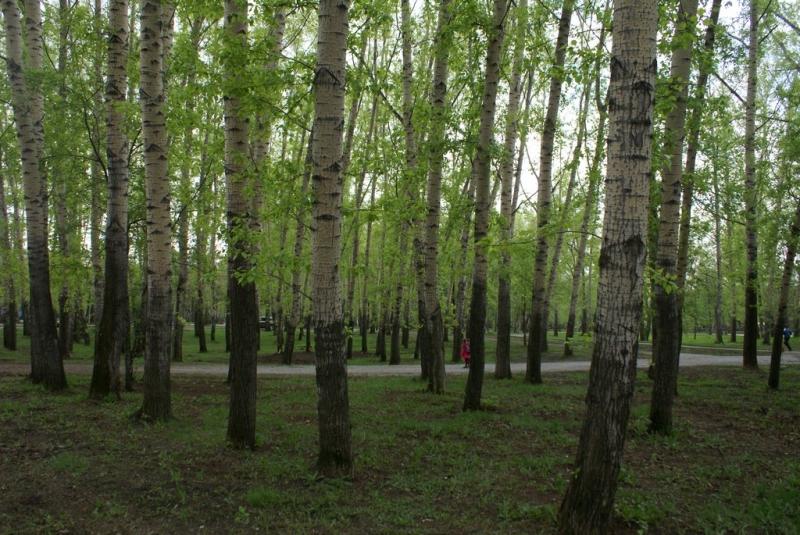 Комсомольский парк благоустроят